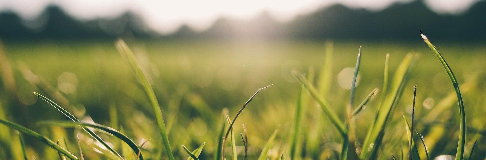 grass-meadow-sunshine-9056-1