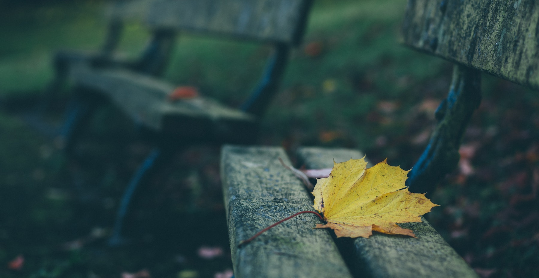 memorial bench with a yellow leaf on it