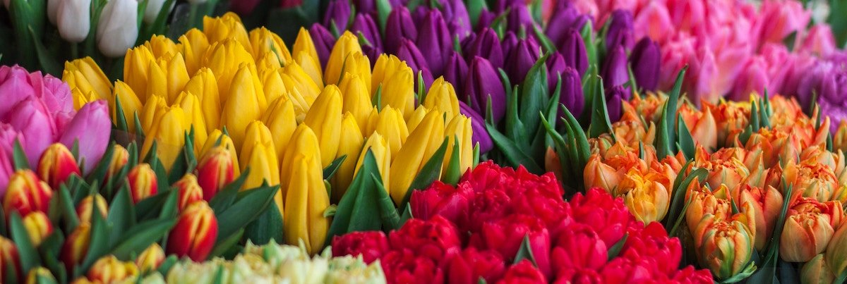 multicolored bouquets of different flowers